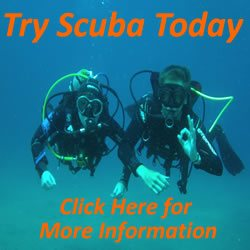 Try Scuba Diving Today
